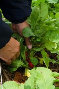 Proyecto de  integración laboral y formación en agroecología de AFES Salud Mental