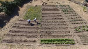 Vista aérea de la huerta de Tomates Felices, Inclusión Laboral y Salud Mental